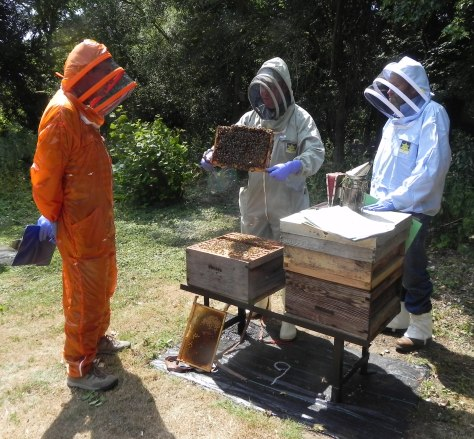 Candidates are expected to be experienced in using a wide range of hive types.