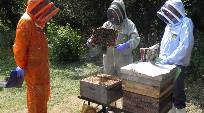 Candidates are expected to be familiar with a large range of hive types