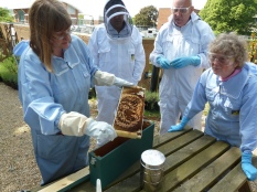 Dr. Karin Alton at the Laboratory of Social Insects in Sussex demonstrates testing for hygenic bees
