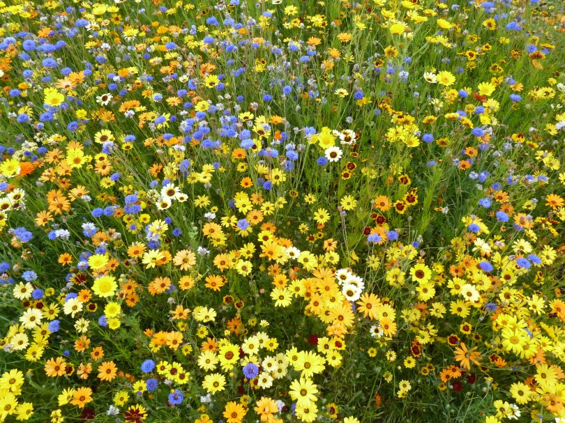 Image of Wildflowers